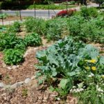 rocky mountain permaculture
